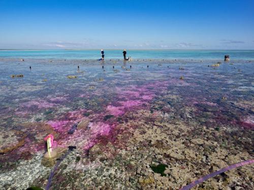 La acidificación marina matará todo el coral