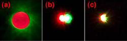 coronografo vortice optico