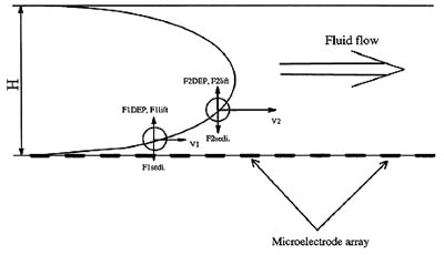 ordenacion nanotubos