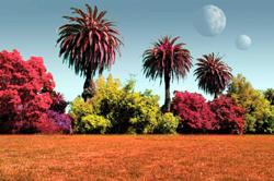 plantas extraterrestres