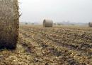 desperdicios agricolas