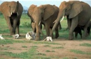 elefantes y muerte