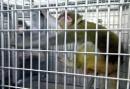 mono y espejo