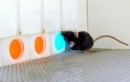 ratones que ven rojo